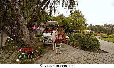 Horse and carriage await passengers at Flower Garden Park in Dalat, Vietnam