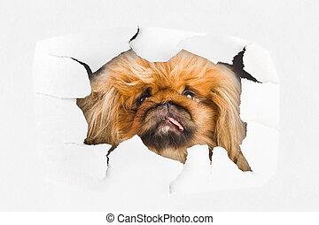 dall'aspetto, buco, carta, attraverso, cane