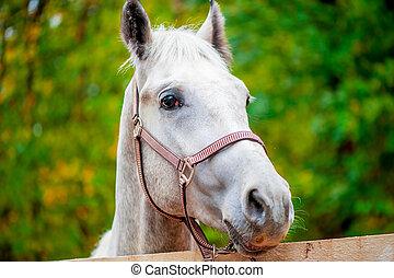dall'aspetto, cavallo, macchina fotografica, primo piano, faccia