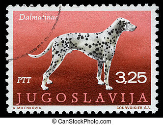 Dalmatian dog - A stamp printed in Yugoslavia shows the...