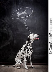 Dalmatian dog dreaming about a bone