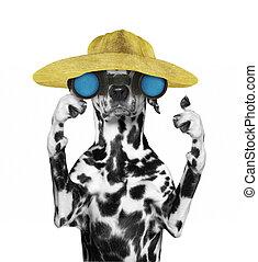 dalmatian, dog, in, een, hoedje, het kijken, en, verrichtend, met, verrekijker, --, vrijstaand, op wit