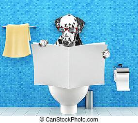 Dalmatian dog sitting on a toilet seat with digestion problems or constipation reading magazine or newspaper