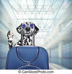 Dalmatian dog waits at the airport with blue suitcase. 3d render