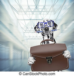 Dalmatian dog waits at the airport with brown suitcase