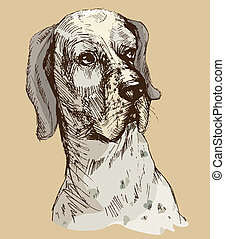 Dalmatian head - hand drawn illustration -sketch in vintage style