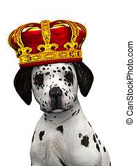 Dalmatian puppy prince - A cute dalmatian puppy with a crown...