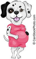 dalmatien, pregnant