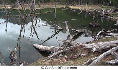 Dam pond dry trees log house beaver in Ushuaia.