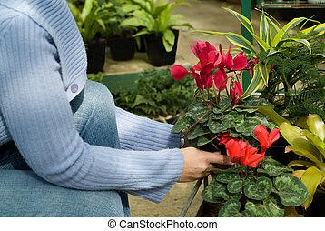 dama, wybierając, rośliny, na, pokój dziecinny