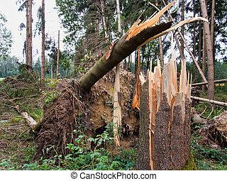 damage., après, arbres, storm., forêt, orage