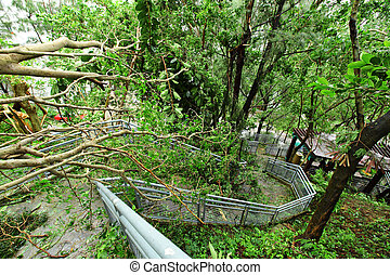 Damaged after typhoon