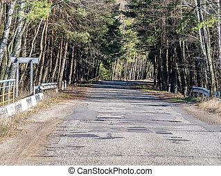 Damaged asphalt road in a pine forest.