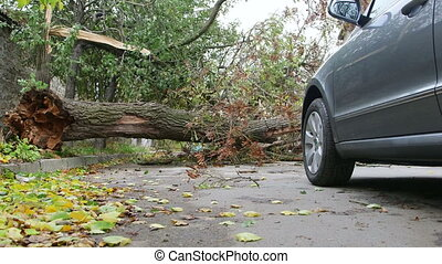 Damaged fallen tree on road after strong storm