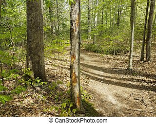 damaged tree trunk with trail in forest or woods