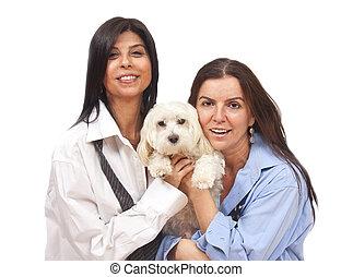 damas, y, perro