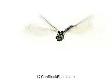 damsel-fly, vuelo