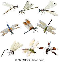 damselfly, 以及, 蜻蜓