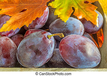damson with autumnal leaves