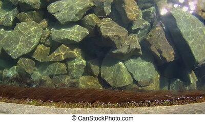 Dance seaweed - Beautiful seaweed is fun swinging on the...