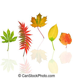 Dancing Leaves of Autumn