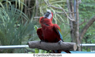 Dancing parrot close up