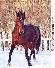 dancying, ladre cavalo