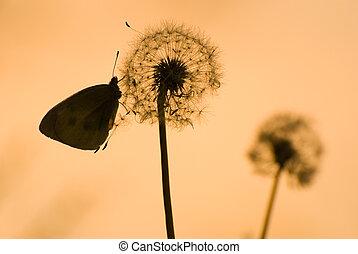 dandelion and butterfly under sunshine