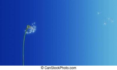 Dandelion Blue Gradient (with Matte) 4K - 4K 3D Render....