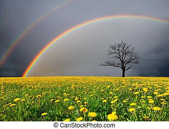 dandelion, campo, e, árvore morta, sob, céu nublado, com,...