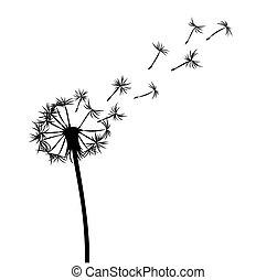 dandelion., campo, flor