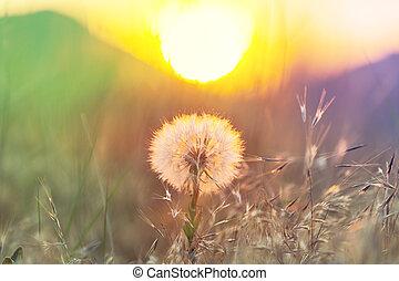 Dandelion - Chamomile