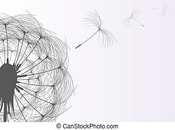 Dandelion - Blow Dandelion On Gray Background