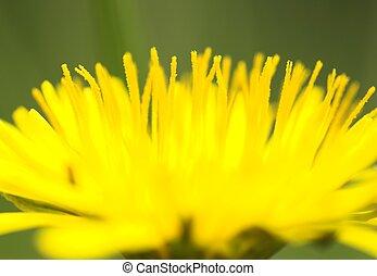 Dandelion Close-up 2 - A close-up image of a dandelion...