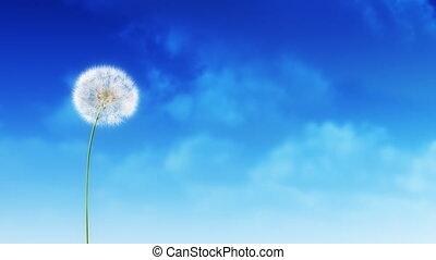 Dandelion on the wind.
