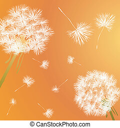 dandelion - Dandelion illustration