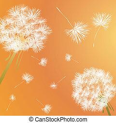 dandelion - Dandelion illustration
