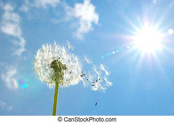 Dandelion seeds blowing in the blue sky