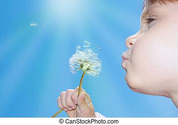 dandelion, desejando, soprando, sementes