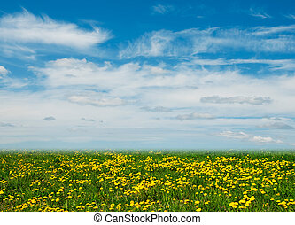 Dandelion field and blue sky as a background