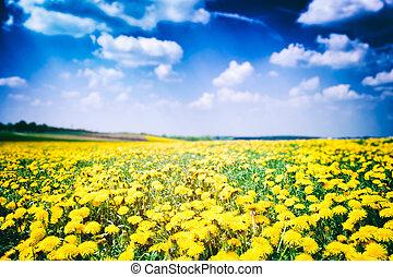 Dandelion field at sunny summer day