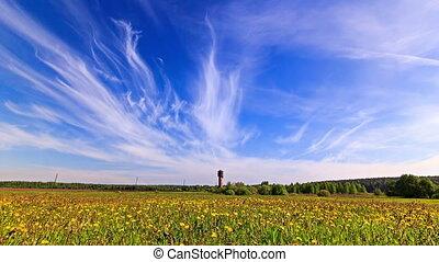 Dandelion field. Time Lapse