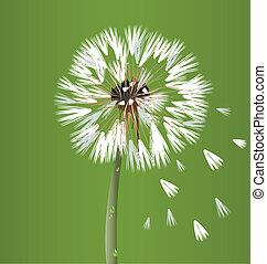 dandelion, flor, flor, vetorial