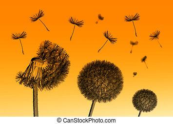 Dandelion flower and flying seeds