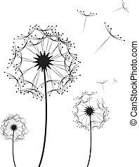 Dandelion Flower - Three dandelion flowers blowing in the...