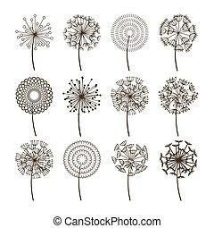 Dandelion flower icons. Dandelions fluffy seeds vector...