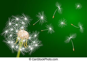 Dandelion, flowering plant