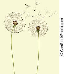 Dry dandelion flowers - vector illustration