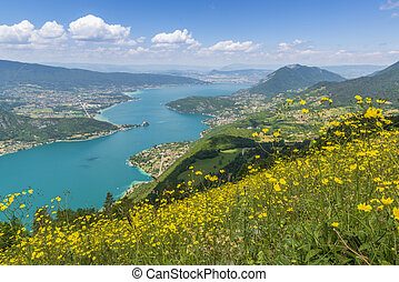 Dandelion flowers on the lake Annecy.