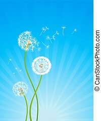 Dandelion flowers - Summer background with dandelion flowers